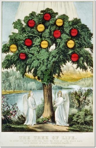 分別善惡樹上的果子 – ㄚ門助福網